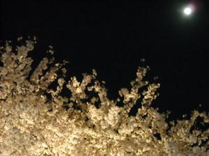 Sakura1_031