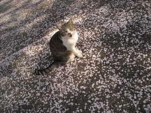 Sakura2_002