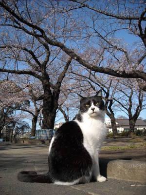 Sakurasaku_016