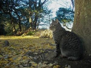Akikama_018