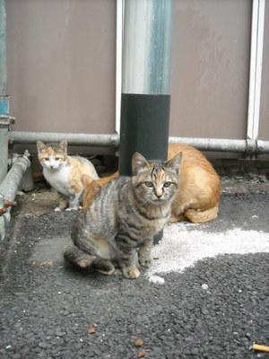 2011nigatu_018
