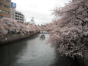 2011sakura2_022