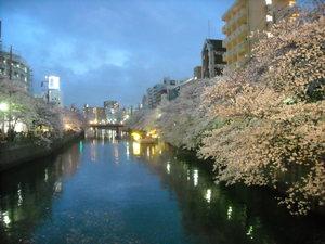 2011sakura2_074
