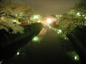 2011sakura2_080