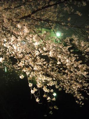 2011sakura2_081