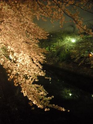 2011sakura2_082