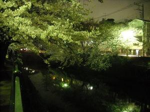 2011sakura2_083