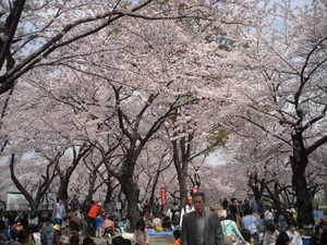 2011sakura3_004
