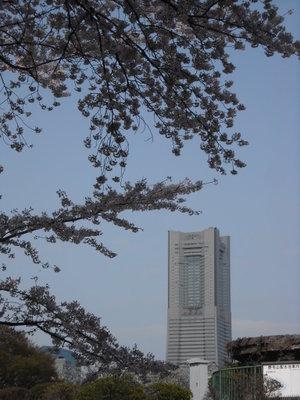 2011sakura3_017
