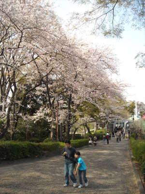 2011sakura3_018