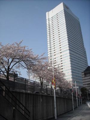 2011sakura3_032