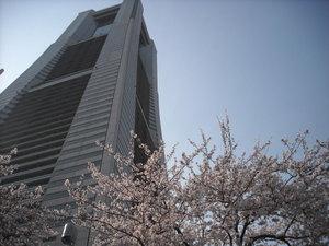 2011sakura3_034