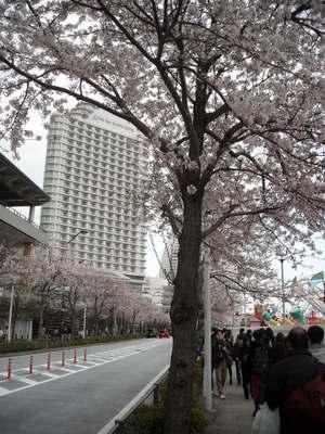 2011sakura3_039