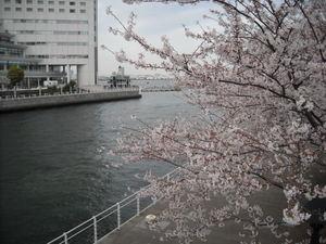 2011sakura3_042