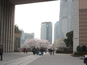 2011sakura3_043