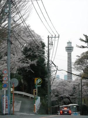 2011sakura3_076