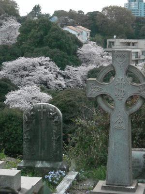2011sakura3_078