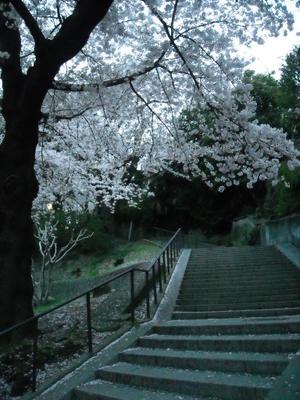 2011sakura3_092