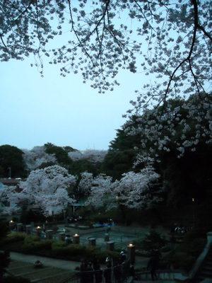 2011sakura3_094