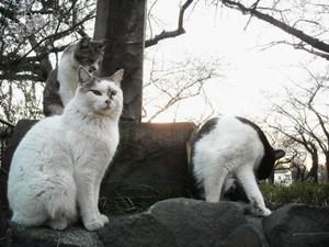 2011sakura_033