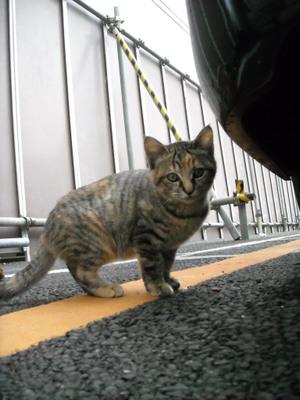 2011nigatu_014