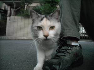 Hituzigumo_070