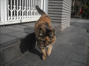 Shinnen_053