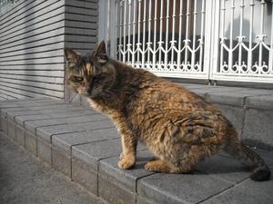 Shinnen_056