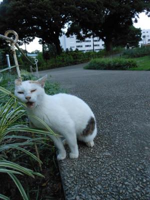 Azisai2012_071