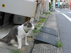 Azisai2012_053