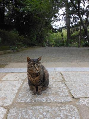 Azisai2012_038