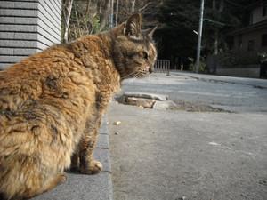 Shinnen_054