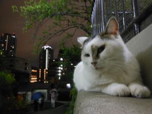 Akiurara_041