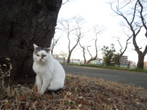 Shinnen_156