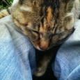 鎌倉猫さんのマリちゃん