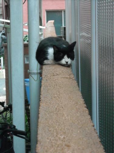 塀の上で寝ていた猫さん発見!!